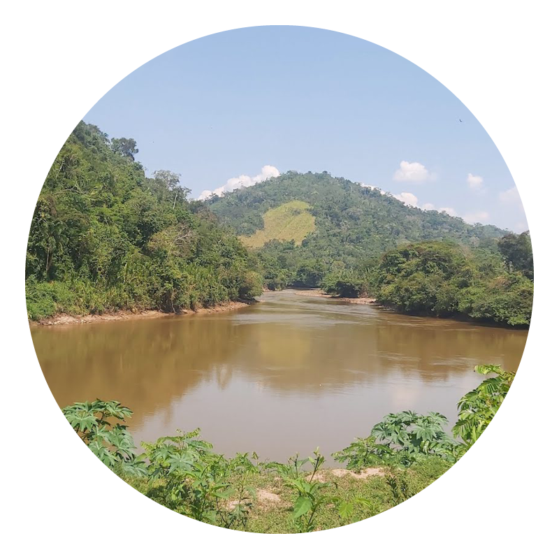 Río, agua, jungla, naturaleza, New Energy Peru